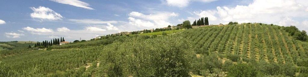 toscaanse olijfolie