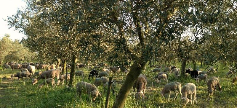 chateau de panisse olijfboomgaard