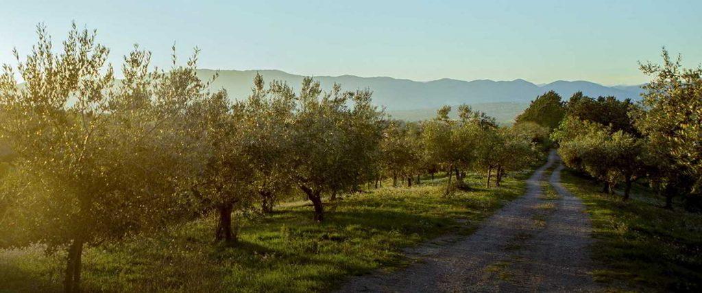 farchioni olijfboomgaard