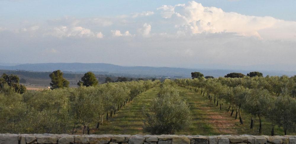 olijfboomgaard olioli biodinamico